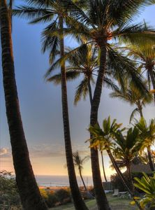 Photo for Hale Maluhia - 2 Minutes from the Big Island's Best Beaches