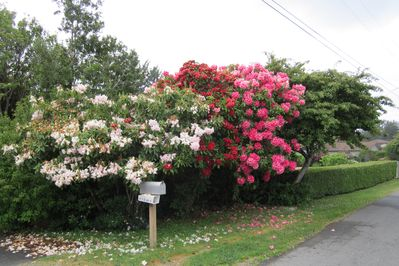 A Rhody Welcome