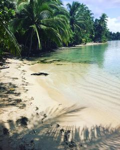 Photo for Jungle Wildlife and beaches just steps away from your door