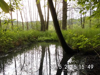 Photo for Holidays in wooded and water-rich surroundings - far away from stress and hectic