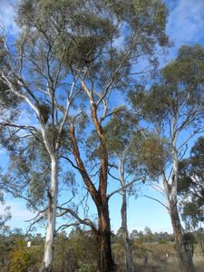 Photo for North Hill, Golden Trees Cottage  Armidale NSW