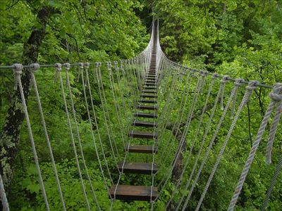 Experience Walking Through The Tree Tops At Navitat Canopy Adventures Great Fun