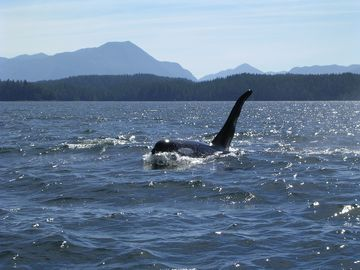 Oceanfront Lodge-Fishing, Hiking,Nature, Scenery & the Famous West Coast Trail