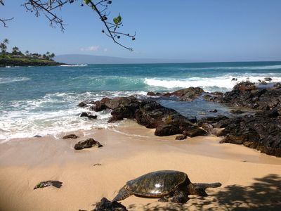 Green Sea Turtles Live and Feed Daily on the Rocks. Watch Without Leaving Home!
