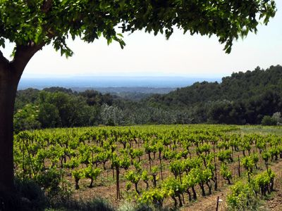 Photo for LE CLOS Gîte at the foot of the Dentelles de Montmirail -15% from 24 to 31/08