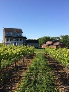 Photo for Wine Country Home on Eco-Vineyard
