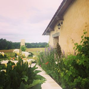 Photo for Escape to the French countryside, an hour to Bordeaux, 20 minutes to St Emilion