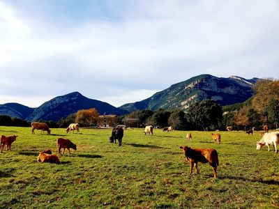 Photo for Located in a Special Pla D'Interès Natural, near Olot and Sadernes