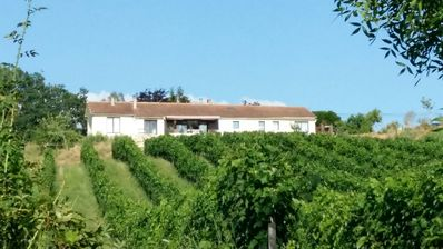 Photo for Vineyard View Studio with 180 ° views of the vineyards