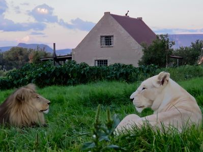 King Aslan with his Queen Suzie outside Lion House.