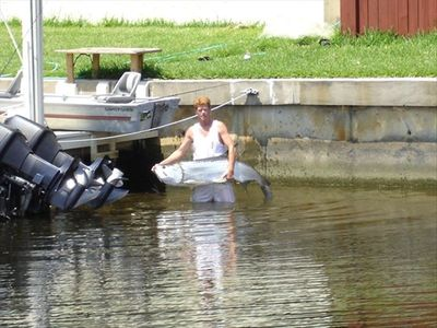 My neighbor catch fish like this all the time in the Lagoon, 90 Ibs  tarpin fish