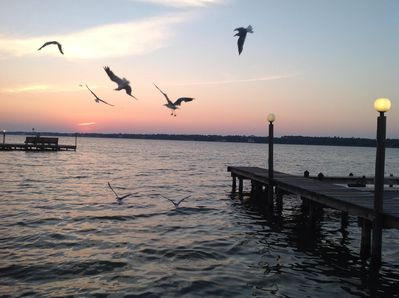 seagulls at sunset beside our pier at the Little Lagoon...