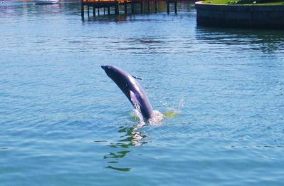 Come Watch the Dolphins Swim while Enjoying the Beautiful Gulf of Mexico View