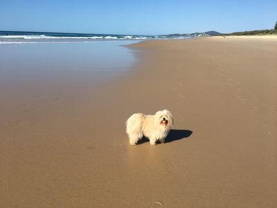 Photo for Dog Friendly Peregian Beach Home with Sunset Views