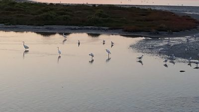 Photo for Holidays in the heart of the Camargue