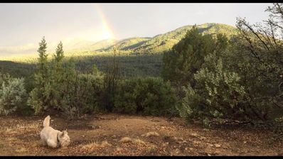Photo for The Beautiful Prescott National Forest