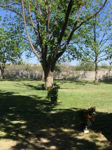 Side and back yard