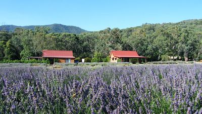 Photo for Lavender view cottage