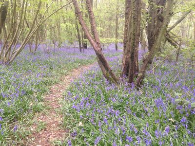 Photo for Peaceful studio in area of outstanding natural beauty in North Downs, Kent