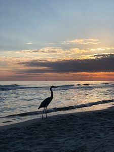 Photo for Quiet Beach Community at the Rookery III