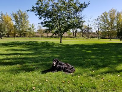 Verdant lawn as you approach the house...dog not included ; )