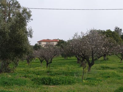 "Photo for ""Olive Grove Hideaway"" Panoramic View And Privacy"""