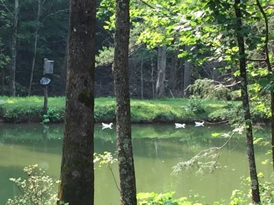 Photo for Come relax at Duck Pond Mountain Retreat w/stream & pond on 9 acres