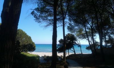 Photo for three-room apartment 50 meters from the beach. Cala Liberotto, sas linnas siccas
