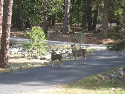 Bambi and her Mama coming for morning visit in the front yard.