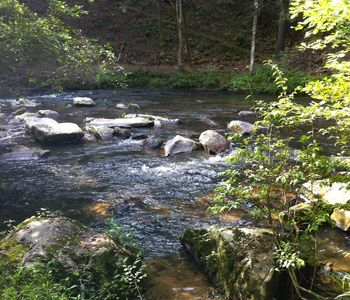 Photo for Fish Creel Lodge - N GA Mountains - Trophy Trout Stream - Ellijay - 3 acres