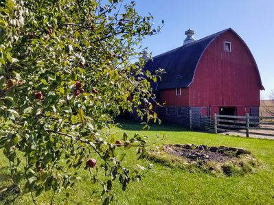 Barn, fire pit and apple trees