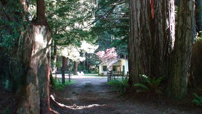 Redwood lined lane to Amy's Cottage