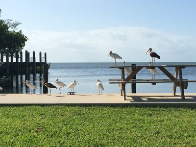Photo for Charming cottages, dockage, pool, kayaks, just minutes to Key West