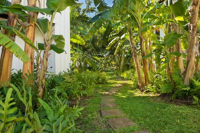 Tropical Paradise Grounds