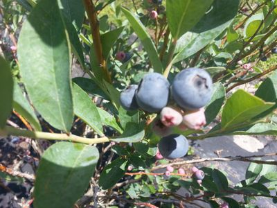 Photo for Stillhouse Hideaway on an organic blueberry farm