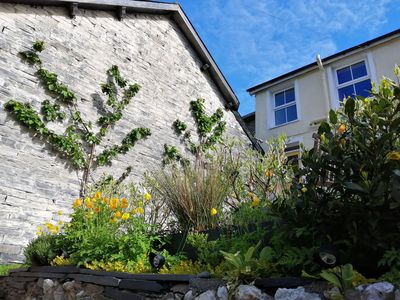 Front of our house with fan trained cherry trees and Welsh poppies