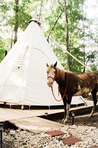 Photo for Authentic Tipi Camping