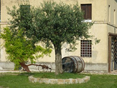 Photo for Casale Oliva in a landscape of oaks, olives and cherry trees