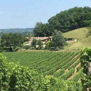 Photo for Beautiful Peaceful Villa Francesa With Large Pool With Vineyard View (10-12p)