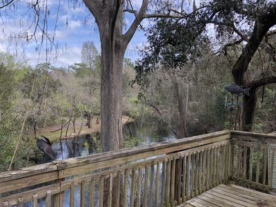 Photo for Back deck overlooks the beautiful Withlacoochee River. A perfect weekend getaway