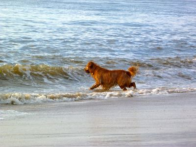 Photo for Elevator! Dog friendly! Avail. 8/16-23. 2nd house from beach.