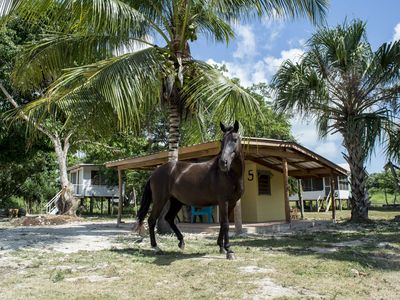 Photo for Small cosy cabana in a tropical farm, with horses in the garden