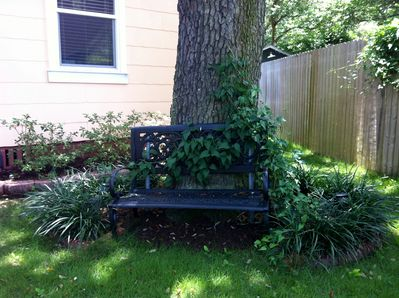 Wrought Iron Bench Under Old Oak Tree