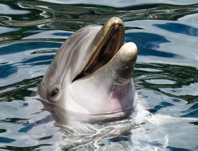 You can see dolphins in the wild here.