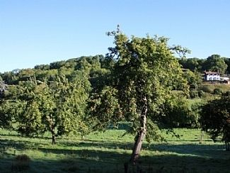 The Folly from the Ancient Orchard in the valley