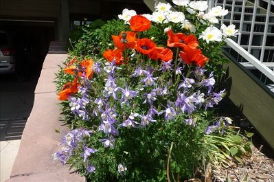 The spring to  fall flowers around the house are breath taking.