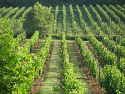 Photo for Spectacular vineyard views - charming vacation rental surrounded by vineyards