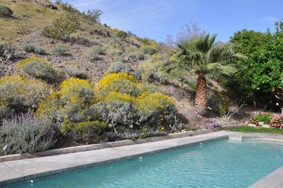 Spring time in our desert paradise!