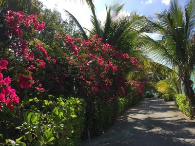 Bougainvillas in bloom at Diamonds By The Sea