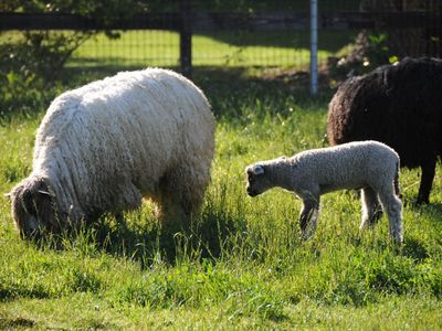 Photo for Namaste Farms; Private Working Wool Sheep Farm in Heart of Wine Country